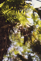 Air Plants and Green Fern Fronds