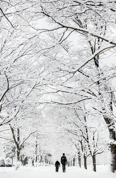 Boy and his dad walk down a tree-lined street during a big snow