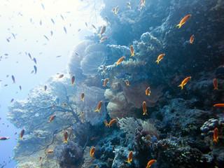Keuken foto achterwand Koraalriffen Unterwasser Ägypten