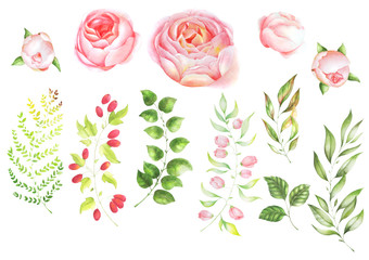 Collection of botanical elements