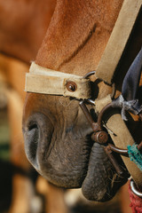 close up of horses' mouth