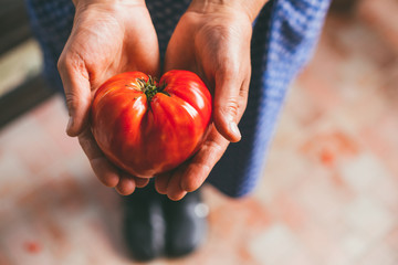 Mature woman holding a heart shaped tomato in her hands