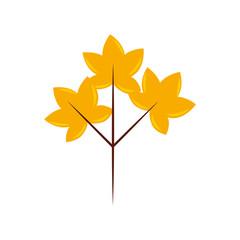 autumn leaves natural botany foliage