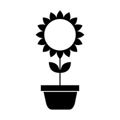 potted sunflower natural plant petal decoration