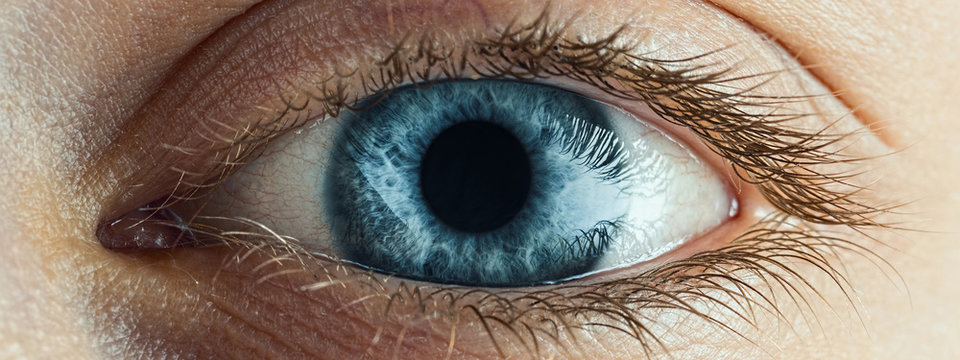 Female Blue Eye With Long Lashes Close Up. Human Eye Macro Detail.