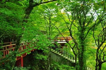 日本の寺の道