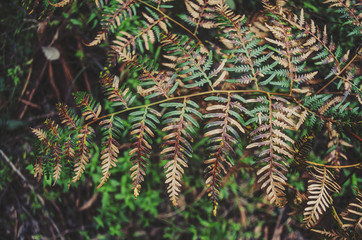 Green and brown fern leaves