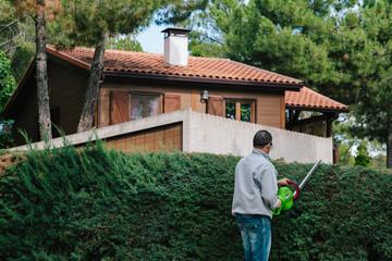 Man Pruning the Arizona Cypress
