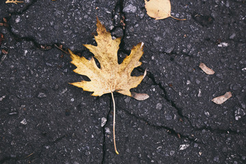 yellow leaf on the old road