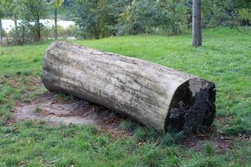 Couleurs d'automne, tronc d'arbre