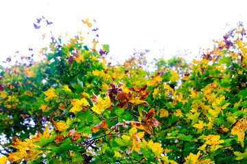 colorful autumn foliage with bright sky