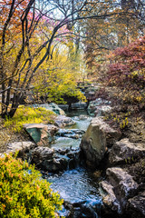 Springtime Brook