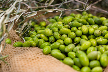 Italian Green Olives on a Net