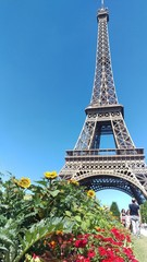Flowers in front of Eiffel Tower