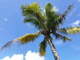Coconut tree against blue sky. Vacation and Summer season concept.