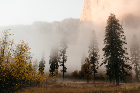 Fog and Mist in A Valley of Tall Trees at Sunset