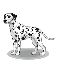 Cartoon of Dog-vector drawing-isolated white background