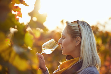 Portrait of a woman tasting white wine in autumn colorful vineyard