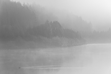 Black and white fine art landscape, fog over lake
