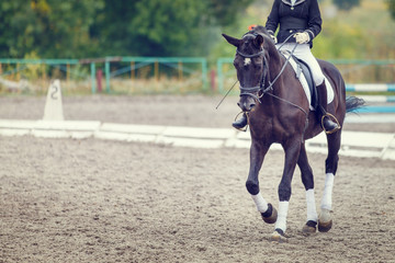 Foto op Aluminium Paardrijden Raven horse with rider girl walking on dressage competition. Image with copy space