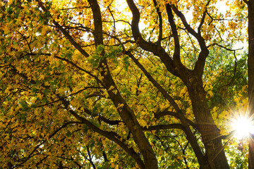 Trees with yellowed foliage in the rays of a bright sun