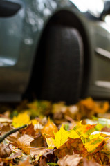 Tire in Leaves