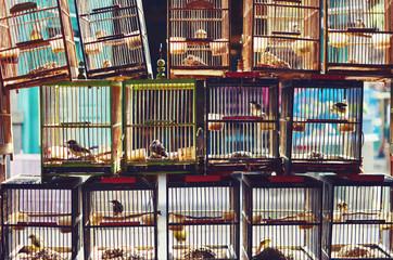 Asian market scene - birdcage pattern