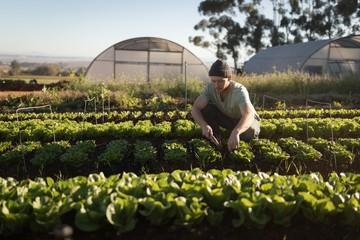 Farmer working on farm