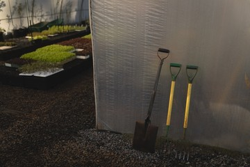 Spade and garden forks in green house
