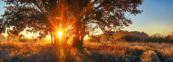 Panoramic autumn landscape. Bright sunrays through branch tree on meadow. Scenery autumn nature for banner. Vivid sunbeams through large tree. Colorful nature on sunrise.