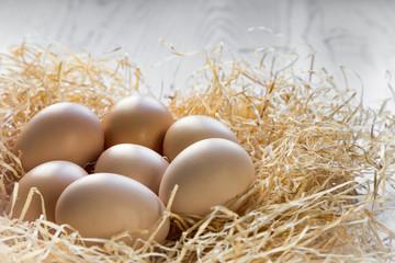 organic chicken eggs