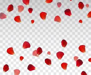 Set of Naturalistic Rose Petals on transparent background. Vector Illustration.