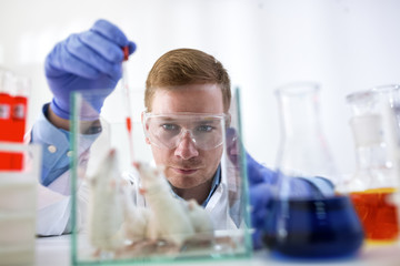 Chemist doing experiment with lab mouses