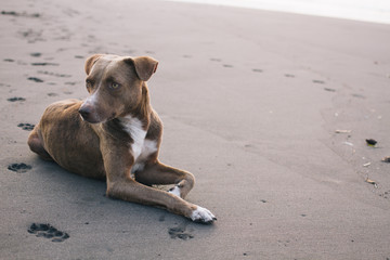 Latin American street dog chilling on the beach