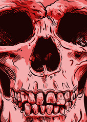 Human Skull Vector Art. Hand drawn illustration.