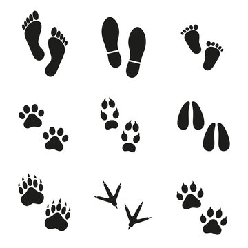 traces of man and animals on a white background