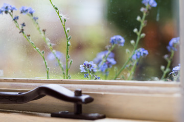 Blue Forget Me Not flowers in a window box brush against a window