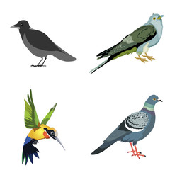 bird set, colibri, crow, cuckoo, dove
