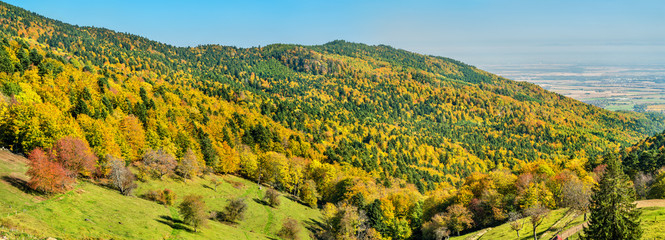 Colorful autumn landscape of the Vosges Mountains in Alsace, France