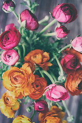 Beautiful bouquet of ranunculus flowers