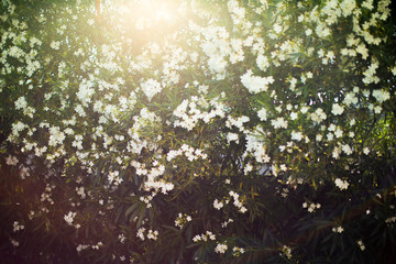 Sunlight filtering through summer flowers