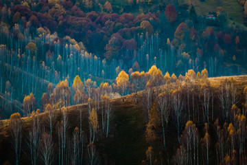 colorful trees in fall in Apuseni mountains, Romania