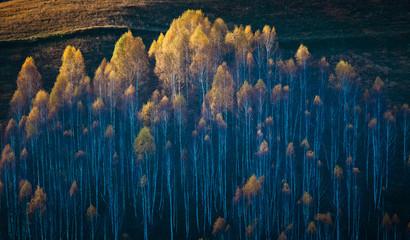 colorful trees in fall in Apuseni mountains, Romania