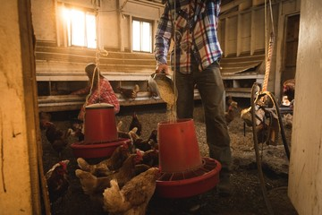 Farmer feeding the hens