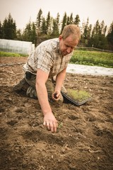 Farmer planting small plant in the soil