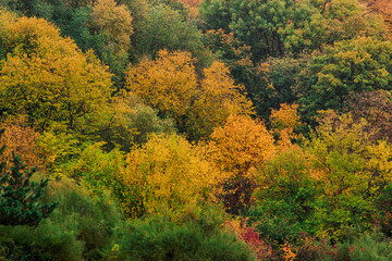 A top view of colourful forest trees in the autumn season.