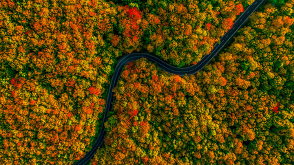 Stunning aerial view of road with curves crossing dense forest i