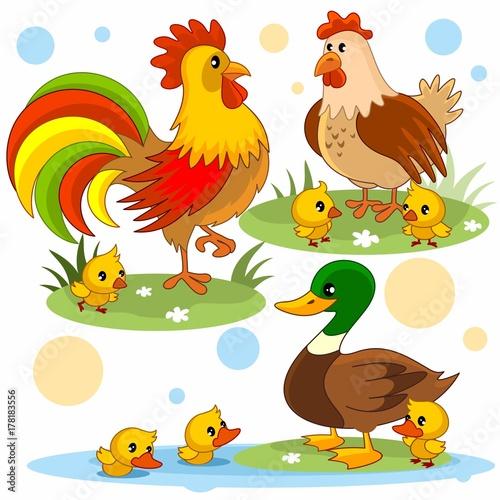 курицей для картинки с детей петух
