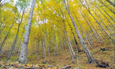 Autumn trees in forest