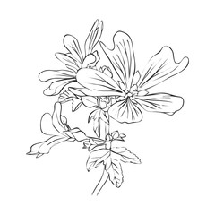 vector drawing flowers